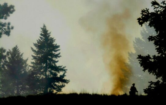 Forest Management and Reducing the Risk of Wildfires
